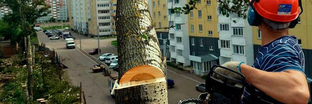 Спил дерева в Москве. Стоимость выполнения работ.