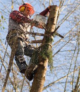 Поможем спилить дерево на даче в районе Электростали и по всему Горьковскому шоссе. https://udaleniepney.ru/vyrubka-derevev-v-elektrostali-spilit-derevo-na-dache/