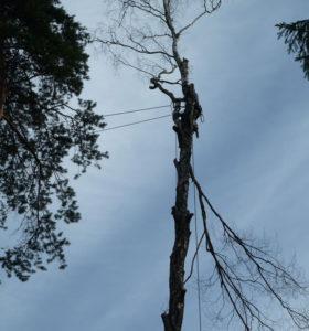 Спилить дерево на даче аккуратно и без повреждений поможет наша команда. https://udaleniepney.ru/