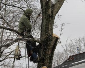 Спилить дерево в электростали, Балашихе, Купавне? Мы поможем. https://udaleniepney.ru/vyrubka-derevev-v-elektrostali-spilit-derevo-na-dache/