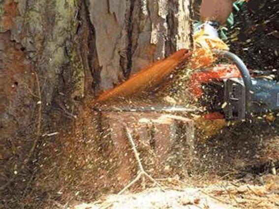 спилим дерево в Москве