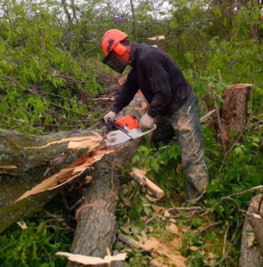 Уберём ненужные деревья, пни и поросль. https://udaleniepney.ru/spilit-yabloni/