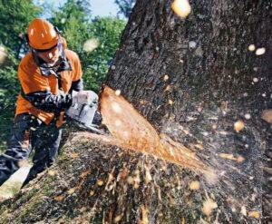 Спилить деревья в Люберецком районе можно и с земли. Если ничего не мешает поблизости, то дерево можно спилить под корень с земли. Поможем Вам в этом. https://udaleniepney.ru