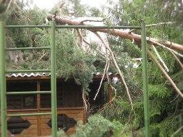 Спилить дерево на своем участке в Москве