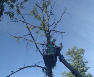 Кронирование, обрезка и спил деревьев в Люберецком районе и по всему Подмосковью, с использованием авто вышки. https://udaleniepney.ru/