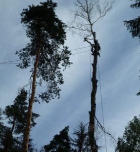 Спилить дерево на участке по частям помогут наши специалисты. https://udaleniepney.ru/