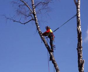 Спилить дерево по частям зачастую необходимая вещь, если нельзя просто повалить его с земли. Наша команда поможет Вам в этом. Работаем в Люберецком районе и по всему Подмосковью. https://udaleniepney.ru