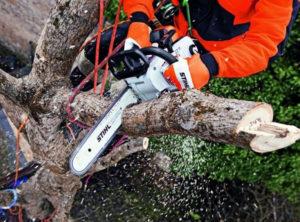 Вырубка деревьев в Московской области и Москве. Спилить яблоню, сливу, другие дачные деревья?<br /> https://udaleniepney.ru/spilit-yabloni/