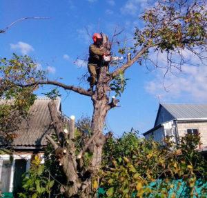Нужно спилить яблони, груши, сливы и другие деревья? Поможем профессионально. https://udaleniepney.ru/spilit-yabloni/