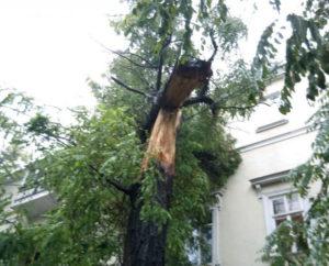 Спилить дерево на участке? Дерево упало на дом и его нужно убрать? Мы поможем. https://udaleniepney.ru/