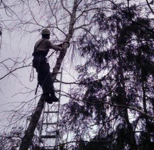 Удаление деревьев в Москве и Московской области. Спилим деревья недорого и быстро. Бронницы и рядом. https://udaleniepney.ru/
